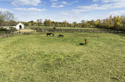 Horses behind a farm fence Royalty Free Stock Images