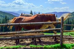 Horses behind a fence against a background of mountains covered with coniferous forests stock photos