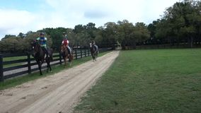 Horses being exercised at a training facility in florida. Young horses being trained at a horse farm in ocala stock footage