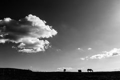 Horses and big sky. Some horses on top of a mountain, beneath a big sky and white clouds royalty free stock photography