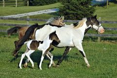 Horses 62 Stock Photos