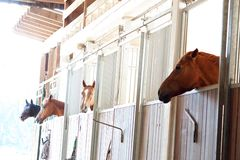 Horses in box in stable