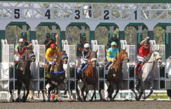 Horses Break From the Gate. ARCADIA, CA - OCT 24: Thoroughbreds break from the gate for an allowance race at historic Santa Anita Park, 10.24.09, Arcadia, CA stock photography