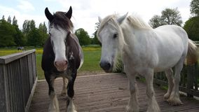 Horses on the bridge. Special,  public place for horses in UK.  Free access Royalty Free Stock Photos