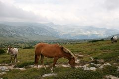 Horses in Bulgarian mountains Stock Photo