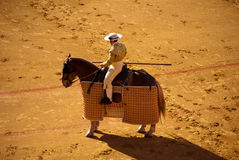 Horses and bullfights Stock Photography