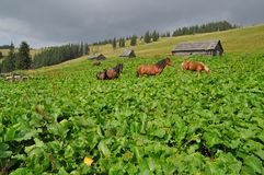 Horses in burdocks Stock Photography