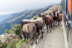 Horses and a bus on a mountain road between Balsas and Leimebamba, Pe. Ru royalty free stock image