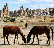 Horses in Cappadocia. Closeup of horses grazing in paddock with rock formations in background, Cappadocia, Turkey Royalty Free Stock Photography
