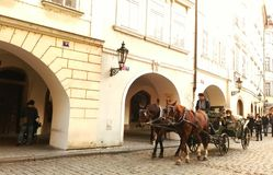 Horses car in street of Prague Stock Image