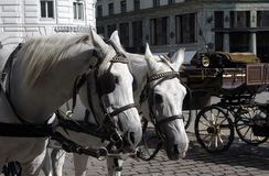 Horses and Carriage. Stock Images