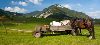 Horses and Carriage. In the mountains of Transylvania royalty free stock photo