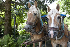 Horses of a carriage Royalty Free Stock Photos