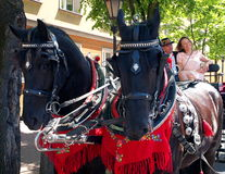 Horses with a carriage. Royalty Free Stock Photo