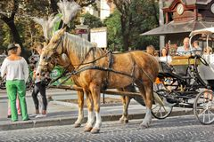 Lviv, Ukraine - August 25, 2018: Horses with a carriage in the city center stock image