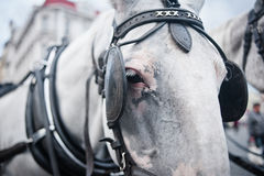 Horses in carriage closeup Royalty Free Stock Photo