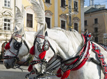 Horses with carriage in Krakow, Poland Royalty Free Stock Photos