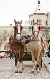 Horses and carriage in Lviv royalty free stock photos