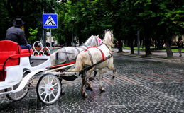 Horses in carriage. The man in the city karetiyide Stock Photo