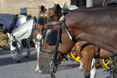 Horses and  carriages Royalty Free Stock Photos