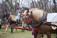 Horses and carriages Royalty Free Stock Image