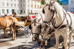 Horses and carriages at the Residenzplatz in Salzburg, Austria Royalty Free Stock Images
