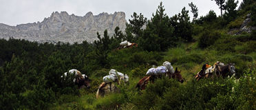 Horses carrying garbage off the Mount Olympus Stock Photography