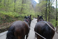 Horses Cart in the Mountains. Horses cart at Neuschwanstein, Germany Stock Photos