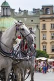 Horses and carts on the market in Krakow, Poland. Royalty Free Stock Photo