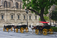 Horses and carts outside of Seville cathedral. Seville, Spain Royalty Free Stock Photography
