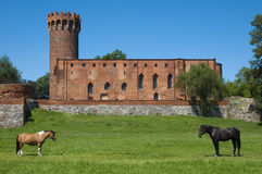Horses with the castle in the background. Medieval Teutonic Order castle in Swiecie, Poland Stock Photos