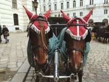 Horses in the center of Vienna. Kind of usual vehicle for  in Vienna Stock Photography