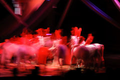 Horses at the circus Royalty Free Stock Image