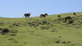 Horses climbing the hill stock footage