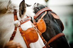 Horses closeup Stock Images