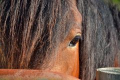 Horses 50 Royalty Free Stock Images