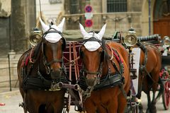 Horses and coach Royalty Free Stock Images