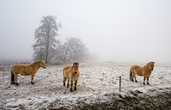 Horses on a cold winter day Stock Photography