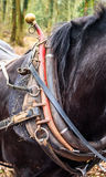 Horses Collar Royalty Free Stock Image