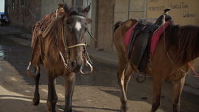 Horses in colonial town street stock video
