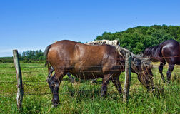 Horses and colts free Stock Photo
