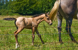 Horses and colts free Royalty Free Stock Photo