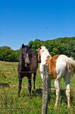 Horses and colts free Stock Images
