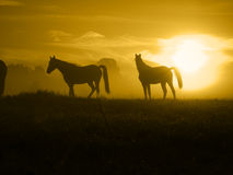 Horses come in the Sunrise_toned Stock Photo