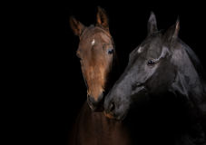 Horses communicating Stock Photos