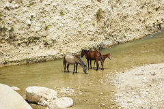 Horses Cooling Off Stock Photo