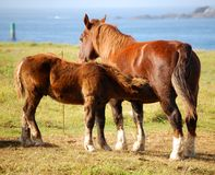 Horses and cordiality Royalty Free Stock Photos