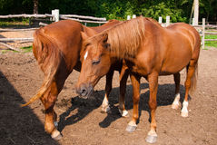 Horses in a corral. Horses relaxing in a corral in the sunshine stock photos
