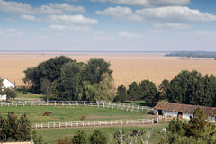 Horses in corral on farm. Landscape Stock Image