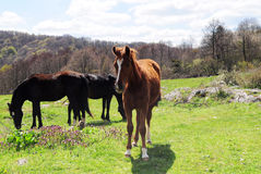 Horses in the country Royalty Free Stock Photo